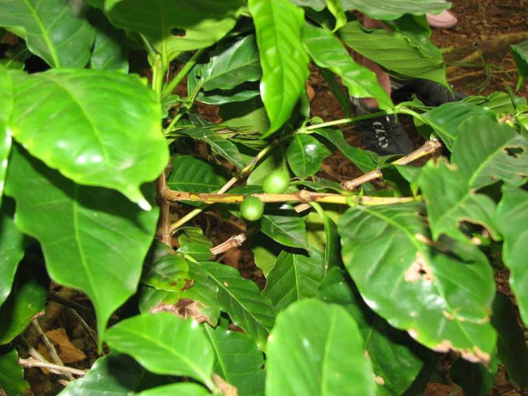 Fruit of the Rainforest - San Juan