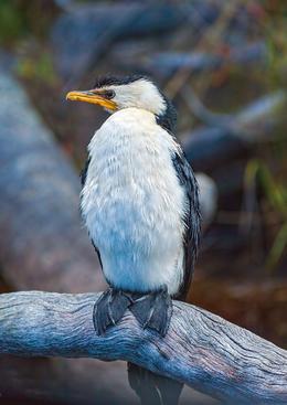 The Austin Powers bird. , John G - October 2012