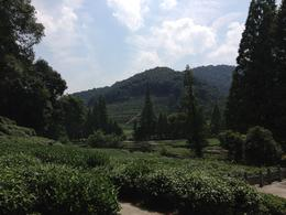 Meijiawu Tea Village, Cat - July 2012