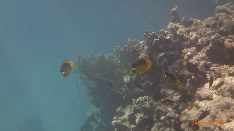 Ras Mohammed Reef - Sharm el Sheikh
