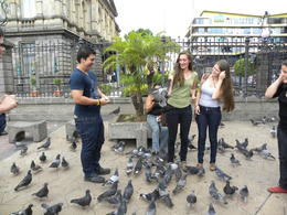 Pigeons being fed outside Teatro Nacional at Plaza De La Cultura , Britt B - May 2013