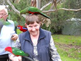 Mel from Tasmania with the parrots on the Great Ocean Road tour. Wayne had seed and the parrots came from the trees and it was great to have them land on me and even greater that they didn't poop on ... , Melva S - September 2010