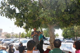 Our guide Amir Call Or spotted some ripe figs on a tree so we took a quick stop to discuss the importance of the fig to the development of underwear and to taste one of the fruits of this tree. , Jeff P - August 2016