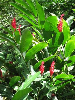 On a hike through the rain forest there were many colorful flowers amongst the vast greenery. - August 2009
