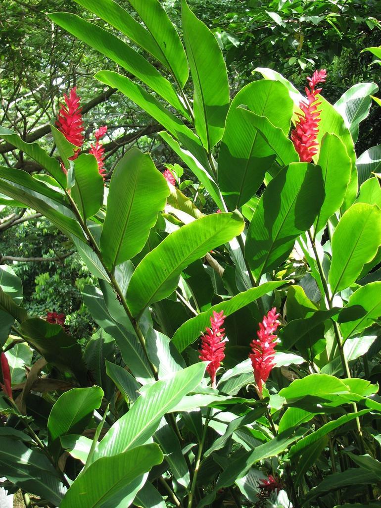 Flowers of the Rainforest - San Juan