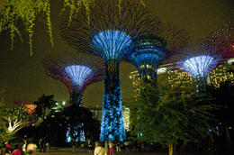 Supertrees by night , William G - November 2013
