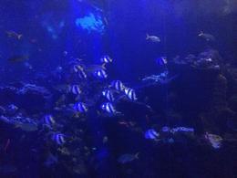 Cool fish in the aquarium, Cat - December 2013