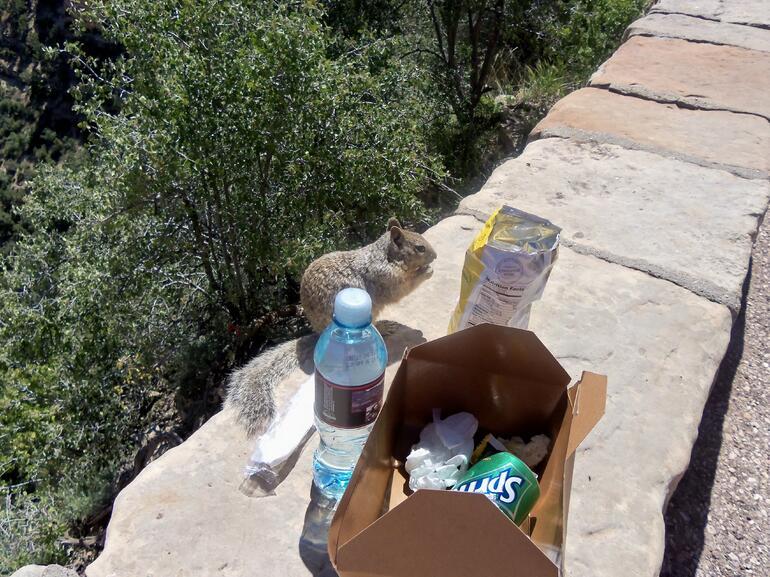 The suqirrels were desperate to get our food - Las Vegas