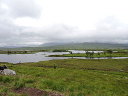 The ground was a spongy layer of peat. Great views and strange experience walking on this unusual surface. , Kay K - July 2016