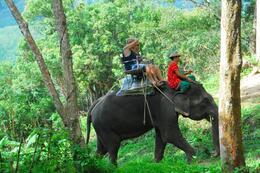 On the elephant trail, Safari Tour of Phuket, Jeff - May 2008