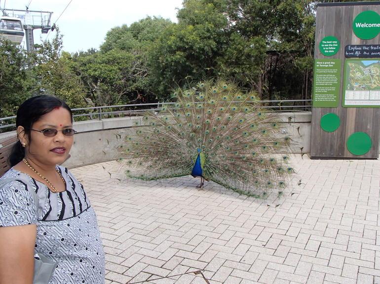 Tarongao Zoo visit - Sydney