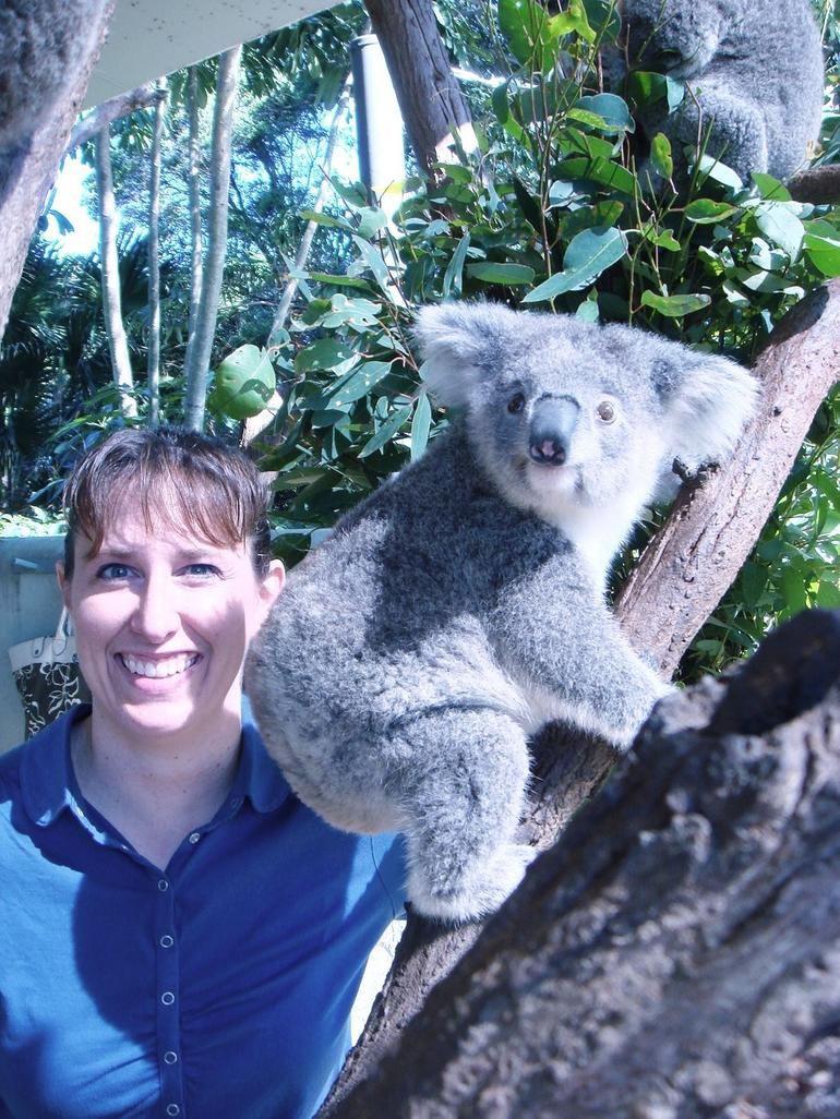 Up close with the Koala Bears - Sydney