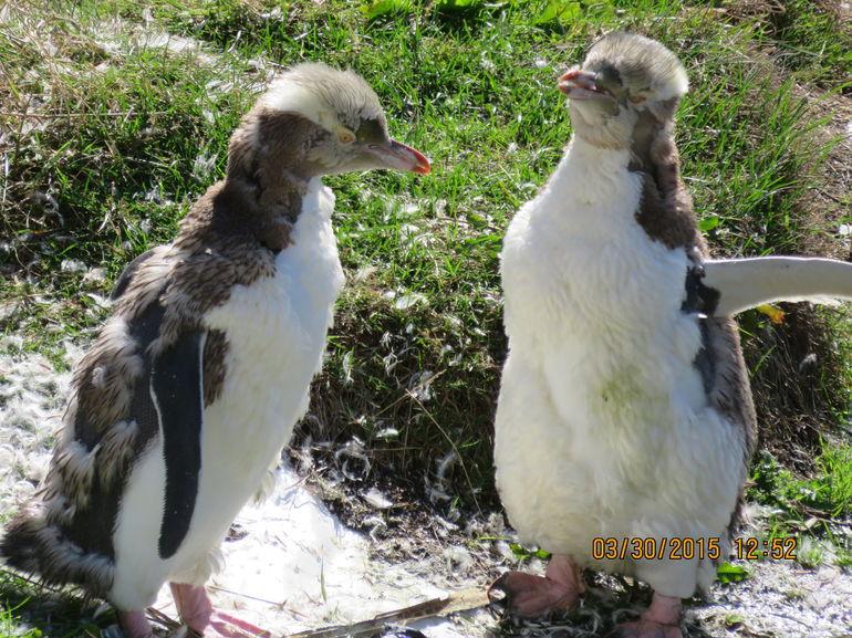 Dunedin and the Otago Peninsula Wildlife Tour