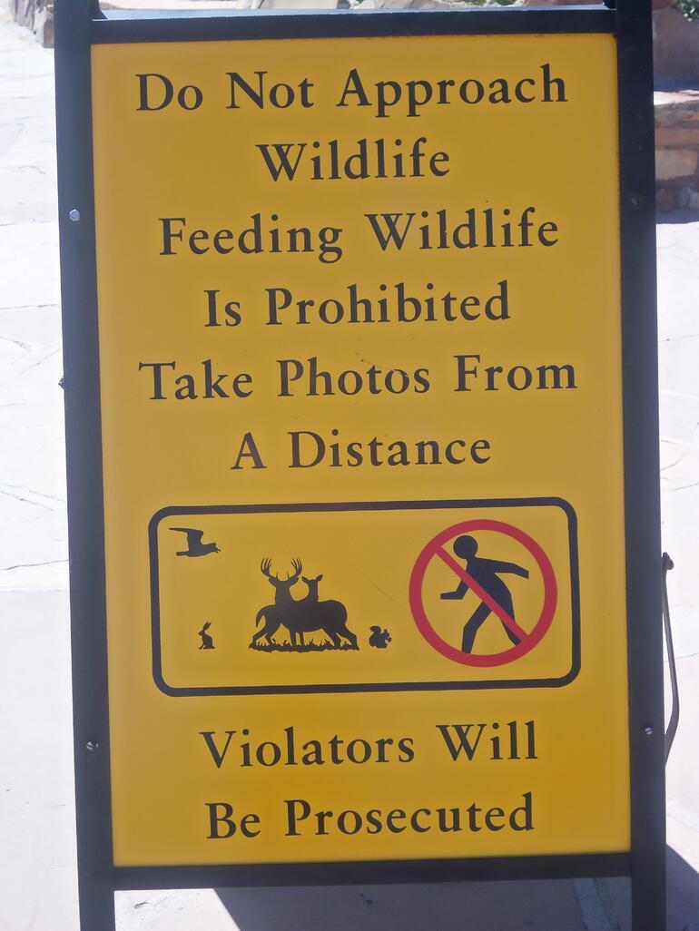 Yep - don't feed the squirrels - Las Vegas