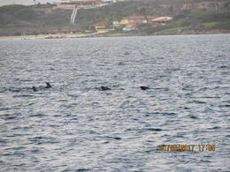 Dolphins , Lisa V - January 2017