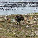 Excursión en la península del Cabo desde Ciudad del Cabo, Ciudad del Cabo, SUDAFRICA