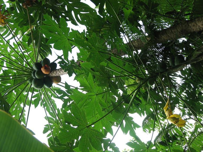 Coconut - San Juan