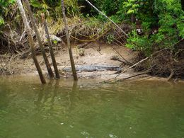 Lucky enough to see a crocodile on the Daintree River , Jeffrey - May 2016