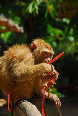 Monkey at the elephant safari camp., Jeff - May 2008