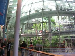 They have an indoor rain forest, which you get to explore and then walk underneath! Very cool. It's definitely the top attraction at the museum. The lines are long, but don't skip it., Global Nomad - February 2009