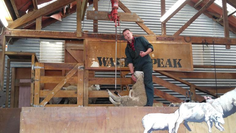 TSS Earnslaw & Walter Peak Farm Experience with Afternoon Tea