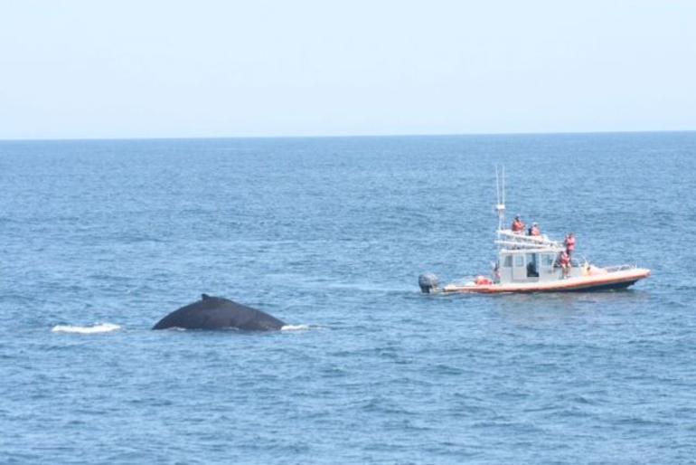 baleine-boston-vue-excursion-balade
