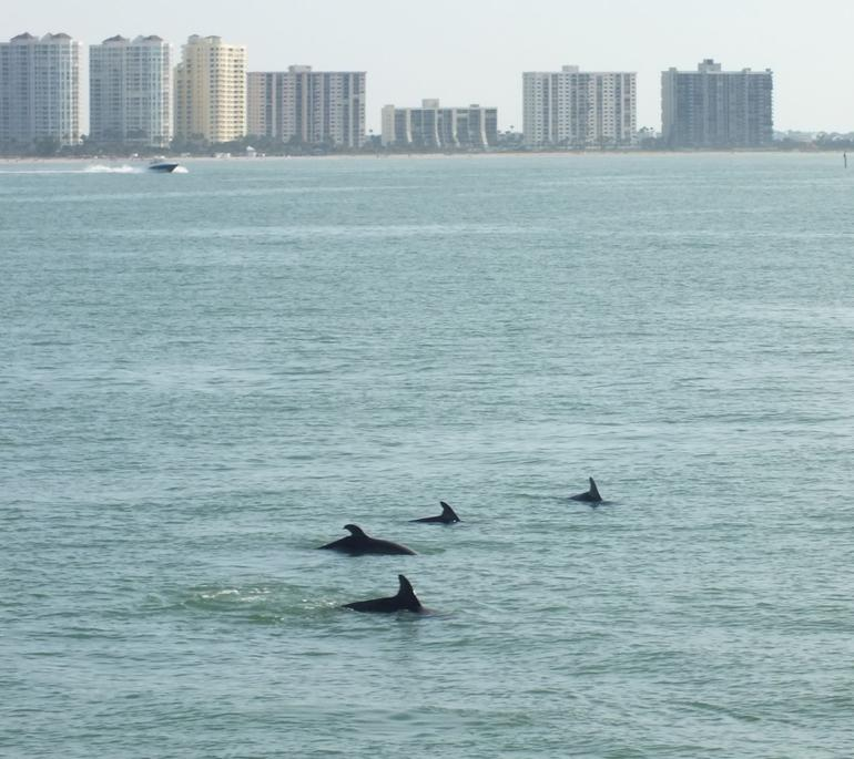 Fisrt sight of the dolphins - Clearwater