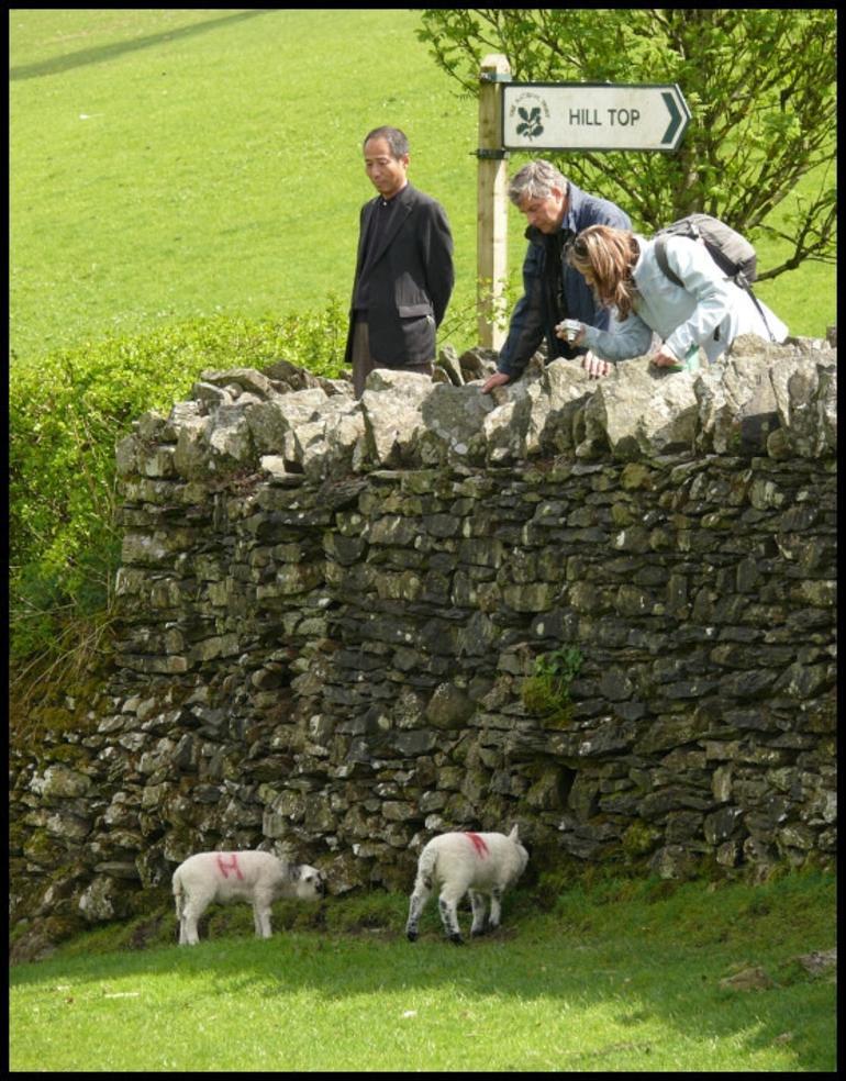 Meet the sheep - London