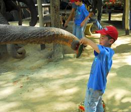 Elephant trunk, Phuket elephant safari, Jeff - May 2008