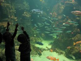 My son spent about 20 minutes staring at all the fish., Global Nomad - February 2009
