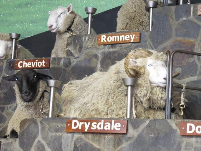 Sheep Show - Rotorua