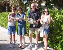 Enjoying our 'one on one' with these beautiful turtles! The 500 lb. one was amazingly HUGE! , valyau - January 2012