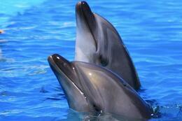 Cute dolphins, Mo Burns - August 2011