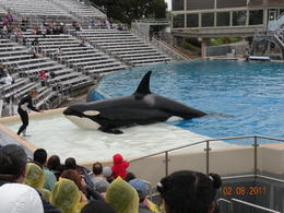 the Shamu Show was great. , Fred B - February 2011