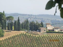 View from grounds of castello gabbiano winery , Kathy W - August 2015