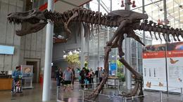 Dinosaur at Academy of Sciences Museum , Ann E J - December 2016