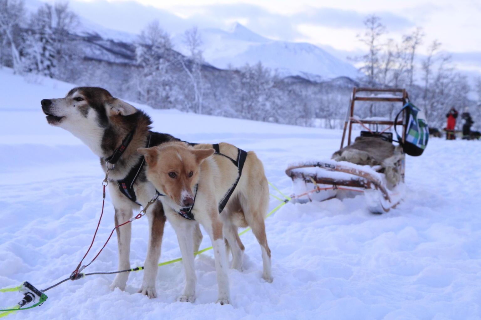 MORE PHOTOS, Lapland Husky Sled Safari from Tromso