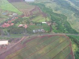 Views of the Dole Plantation, Bandit - February 2011