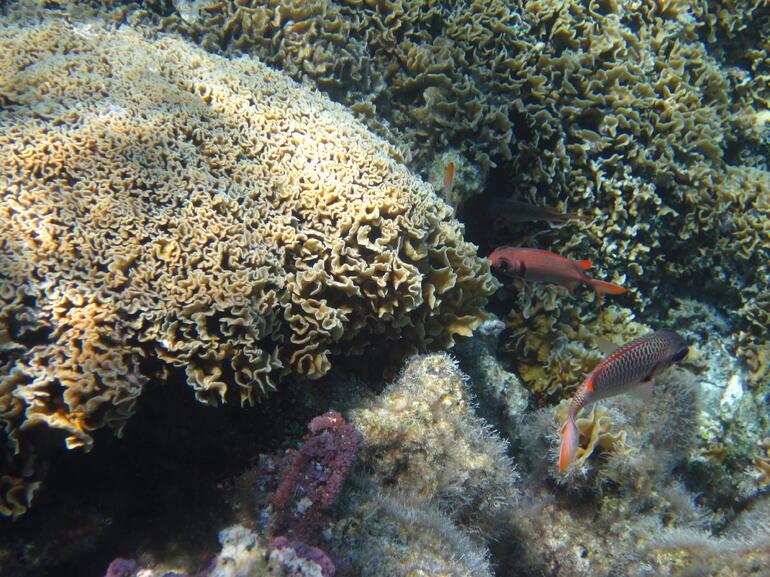 IMG_0163 - Bora Bora