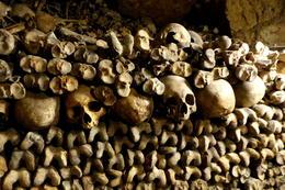 More bones and skulls. , Jeff L - September 2014