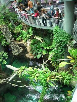 One of the walkways through rain forest., Global Nomad - February 2009