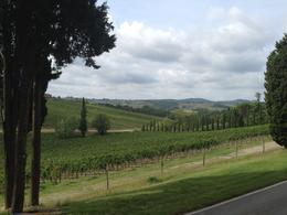 The vineyards of Poggio Casciano. , tanyaewilliams - September 2014