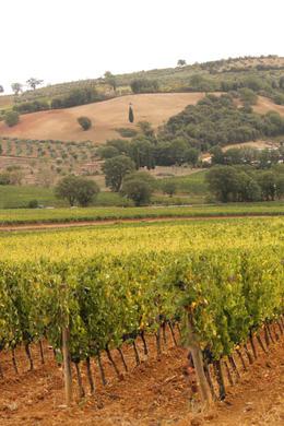 View of the Vineyard , Alisa M - October 2012