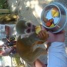 Aventura de tirolesa e na Terra dos Macacos saindo de Punta Cana, Punta de Cana, REPÚBLICA DOMINICANA