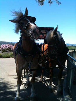 Our fun loving draft horses, Cody and Cheyenne., Melissa H - August 2013