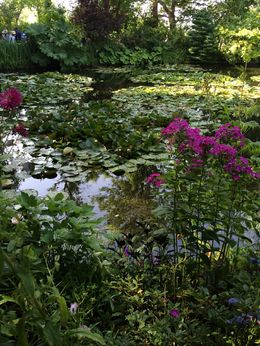 Water Garden , terri - July 2015