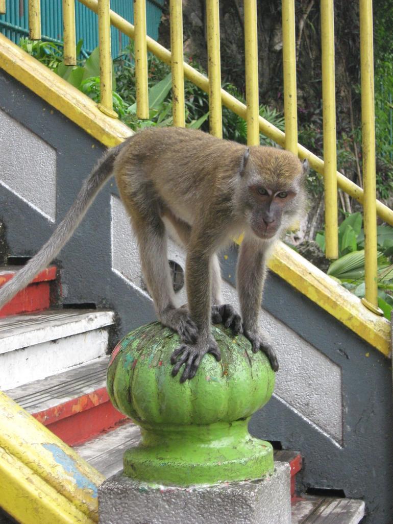 Monkey - Kuala Lumpur