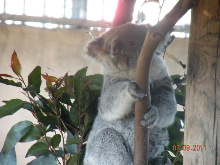 San Diego Zoo - San Diego