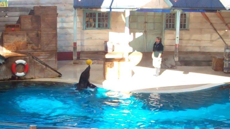 Seal Show, Taronga Zoo - Sydney