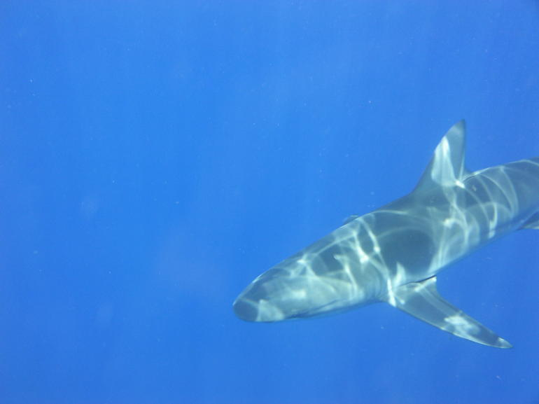 shark dive 012 - Oahu